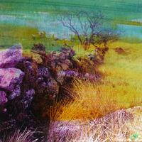 dartmoor-wall