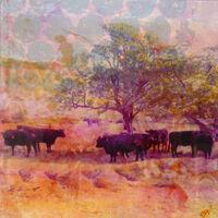 dartmoor-cows