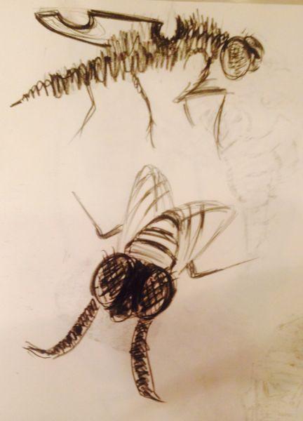 Fly sketch 3
