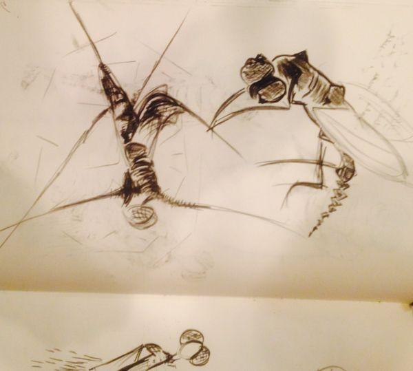 fly sketch 4