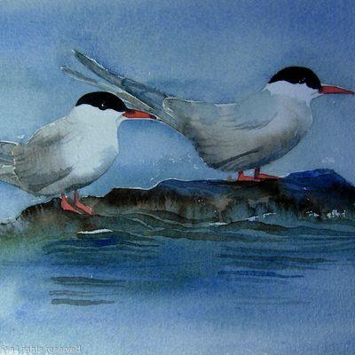 Terns on a rock