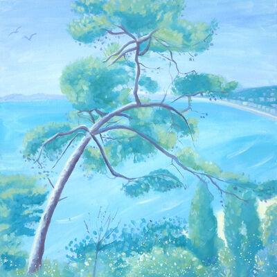 Pine Tree, Nice