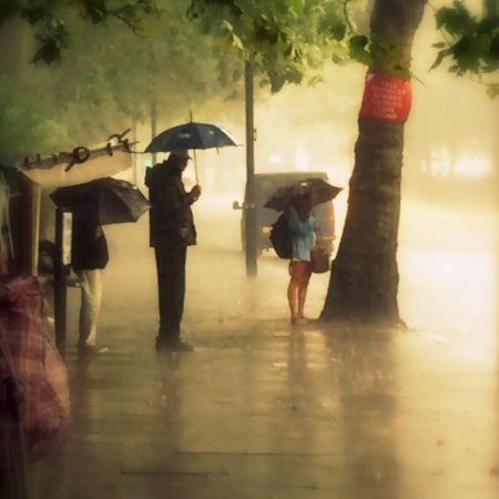 Bays in the Rain 1