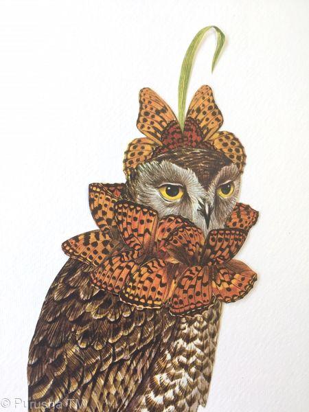 lee honey collage owl