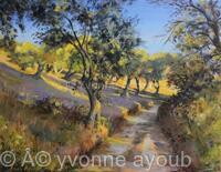 Olive Groves in Autumn Sunlight
