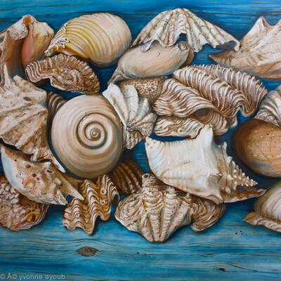 Sea Shells on Wood