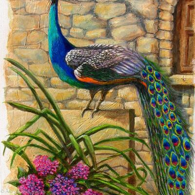 Peacock at Evangelistra