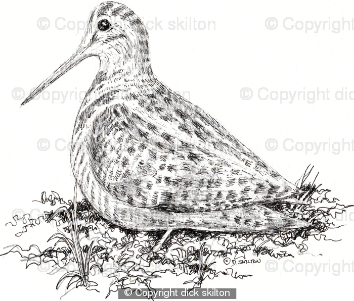 Woodcock drawing as pack of 6 greeting cards personalised by you woodcock drawing as pack of 6 greeting cards personalised by you m4hsunfo Choice Image