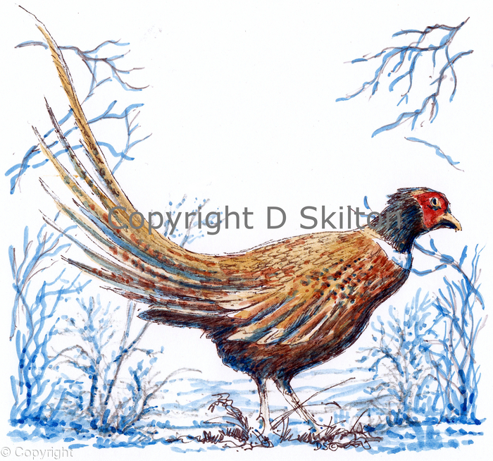 Pheasant in winter greeting card ( this can also be a shoot card image)