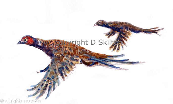 pheasants brace flying to the left