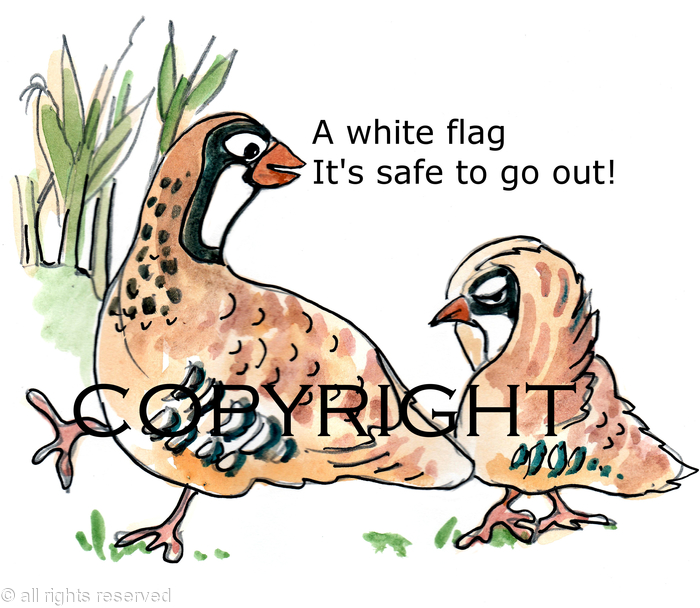The White Flag Cartoon Possible Image For Shoot Card Or
