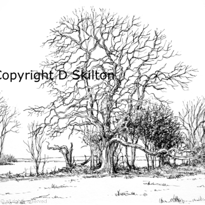 The old oak Example of artwork for shoot cards