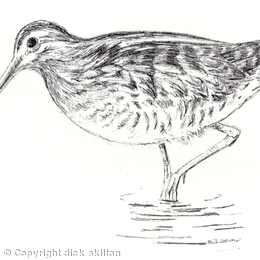 Snipe as a greeting card ( pack of 6) these can be personalised
