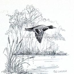 Flying duck over the pond. Image which may be used on a 10cm by 7cm traditional shoot card