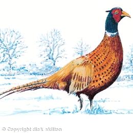 Standing Pheasant winter image