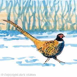 Pheasant sunset snow