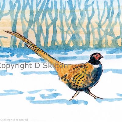 Pheasant sunset snow