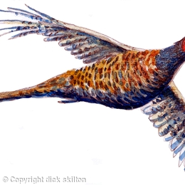 Pheasant flying up with wings outstretched possible bespoke shoot card image
