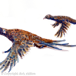 pheasants brace flying to the left