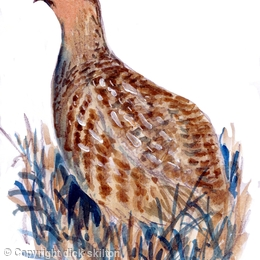 Partridge in stubble greeting card