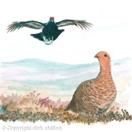grouse male and female image for front of shoot card