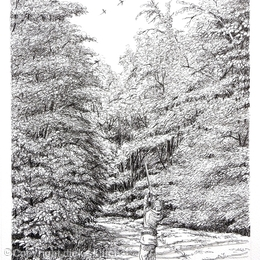 A woodland drive, pack of 6 greeting cards