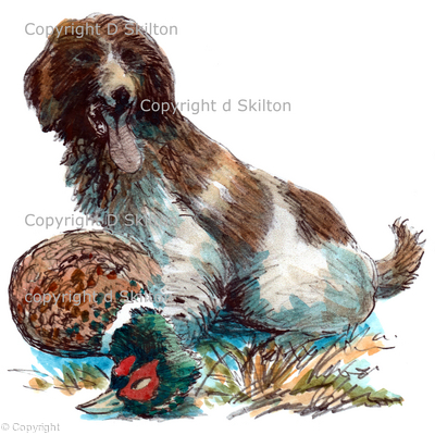 dog with cock Pheasant coloured