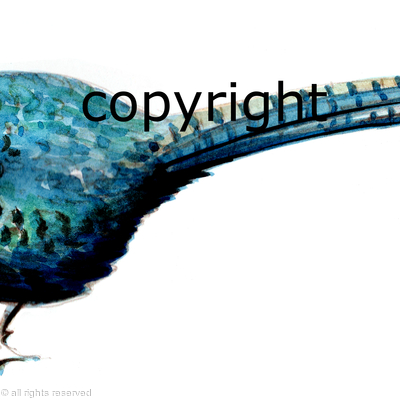 Melanistic pheasant painting for possible bespoke shoot card layout