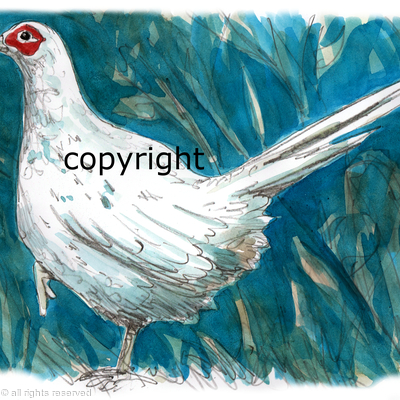 pheasant leucistic white possible bespoke shoot card image