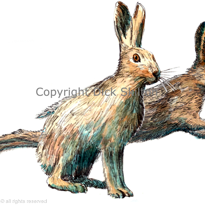 Two hares possible shoot card image or greeting card