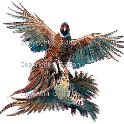 Pheasant and partridge rising, possible bespoke shoot card image. We can do any combination of birds for your card