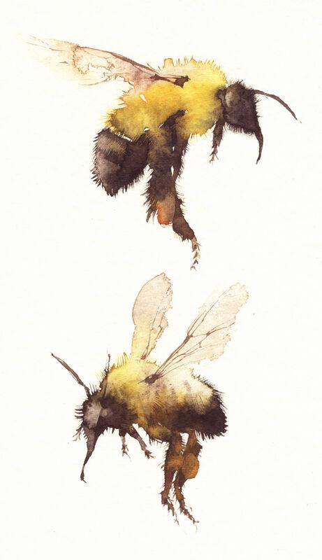 bumble bees KO3