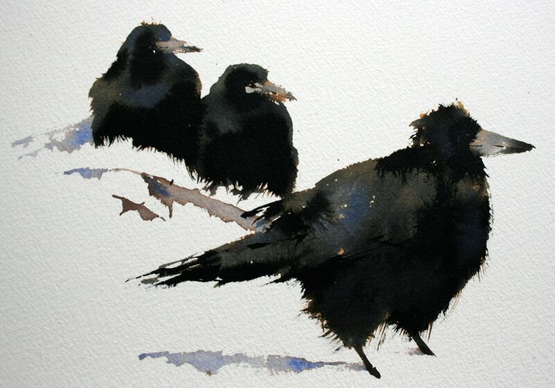 Image result for rooks in snow
