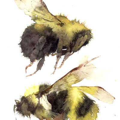 two bumble bees KO15