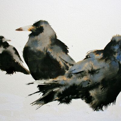 Rooks in the Snow