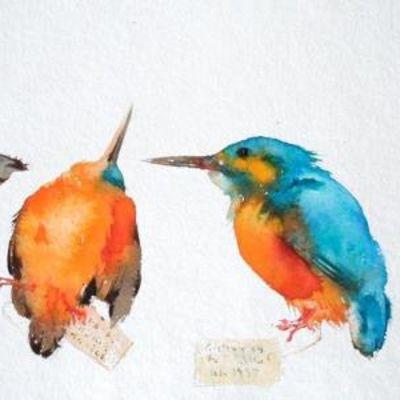 Kingfisher Skins