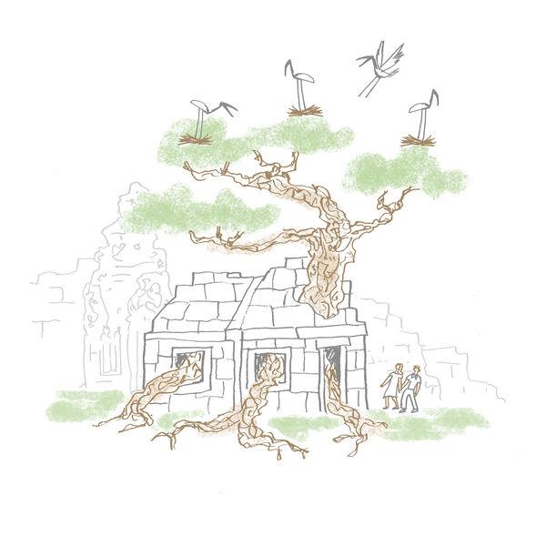 Cambodia Temple Tree