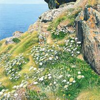 Clifftop Cornwall
