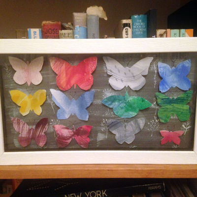 boxed butterflies