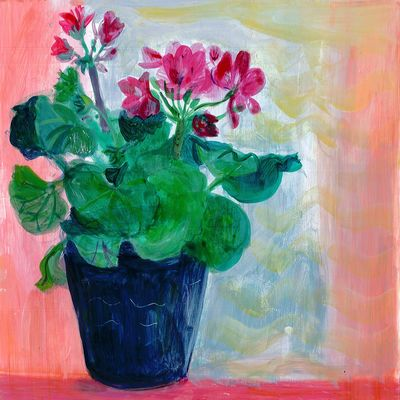 Pelargoniams