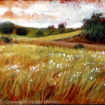 Summer fields, Youlgrave