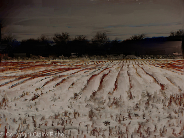 'Corn Stubble in the Snow' - January 2013