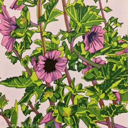 Cornish Flowers