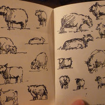Sheep studies 1