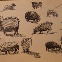 sheep studies 2