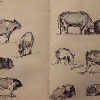 cow studies 1