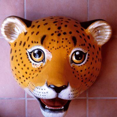safari head