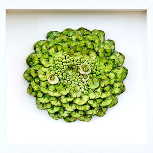 Lime Green Hydrangea