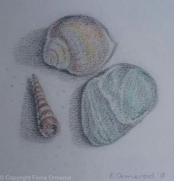 Two Shells  and a Sea-Green Stone