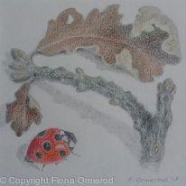 Oak Twig with Ladybird